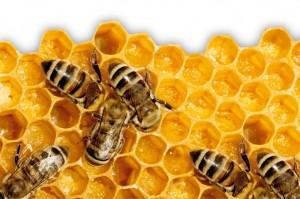 AllSense-Aroma-Honey