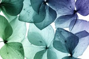 AllSense-Aroma-Leaves