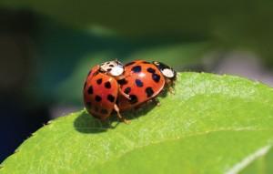 Lovin' Lady Bugs